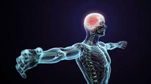 Nervous System Human Anatomy Human Physiology Somatic Nervous System Youtube