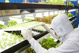 plants can grow without sunlight and soil framing for the future
