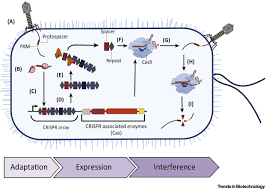 advances in industrial biotechnology using crispr cas systems