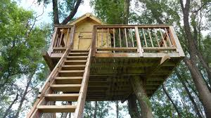 The Best Trees For Building Treehouses  Sara Thompson  Medium