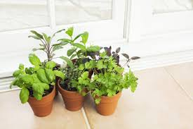 Indoor Vegetable Container Gardening - awesome information about indoor vegetable container gardening