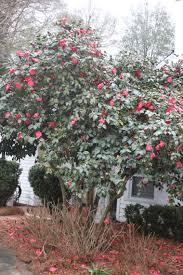 Backyard Treasures Dothan Al Beautifulgardener Using God U0027s Inspired Beauty To Enhance Your