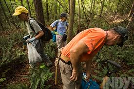 native rainforest plants before the bulldozers come the n c native plant society tries to
