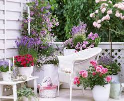 Plants For Patios In The Shade Small Rose Garden Growing Roses In Containers Balcony Patio