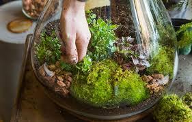 self sustaining terrarium ideas u2013 outdoor decorations