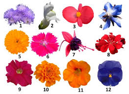 Edible Flowers Edible Flowers Both Tasty And Healthy