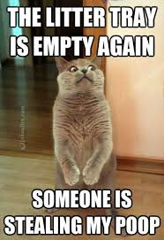 Internet Meme Cat - joke4fun memes cat is scared