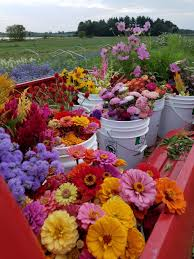 flowers in bulk flowers bulk buckets
