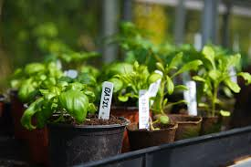 Best Vegetables For Small Garden by High Yield Plants For Small Garden Spaces
