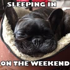 French Bulldog Meme - 111 best frenchie memes images on pinterest meme memes and boston