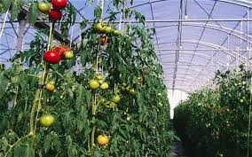 grow your own veg save the planet telegraph