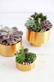 diy succulent 15 easy diy succulent planters porch advice