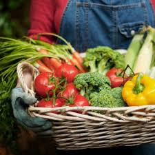 planting a successful vegetable garden