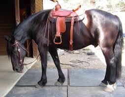 horse saddle frogpond chronicles big horse small saddle