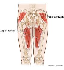 Webmd Human Anatomy 20 Best Recoup Images On Pinterest Stretching Workouts And