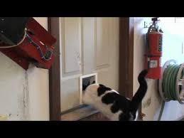 Exterior Cat Door How To Install A Pet Door