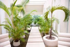 indoor gardening gifts home outdoor decoration