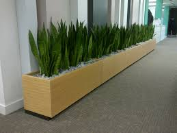 floor troughs with sansevieria bring high density planting to a
