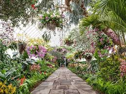 Botanical Garden Orchid Show Living Chandeliers Are The Highlight Of Nybg S Orchid Show