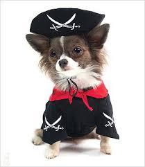 Boy Dog Halloween Costumes Boy Dog Costumes U2013