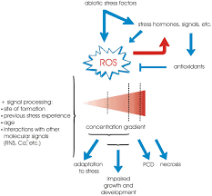 frontiers ros mediated abiotic stress induced programmed cell