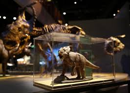 world of the perot museum of nature and science dallas