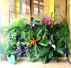 diy tropical pallet living wall a piece of rainbow