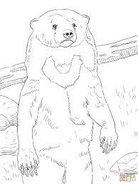 sun bear portrait for coloring page animal new sun bears