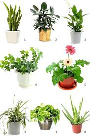 best indoor plants for low light small indoor house plants small indoor plants to decorate house best