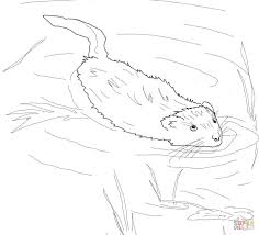 muskrat swimming in pool coloring page free printable coloring pages