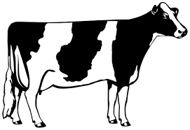 cute cow coloring page free clip art clipartandscrap