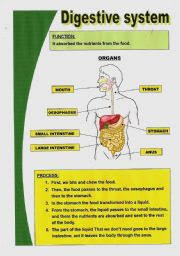 english teaching worksheets digestive system
