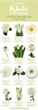 wedding flowers meaning types of white flowers meaning quotes idea