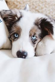 best 25 dogs ideas on pinterest cute dogs dogs and puppies and