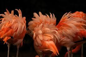 tracing the roots of beautiful bird hues u2013 phenomena