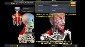 3d Head Anatomy Muscle And Motion Anatomy Android Apps On Google Play