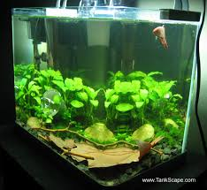 Aquarium For Home Decoration Spiffy Pet Products Betta Fish Tank Setup Ideas That Make A