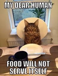 Thanksgiving Cat Meme - cat pinx pets