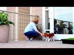 patio door glass inserts petsafe official website