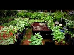 roof garden plants how to make your own easy rooftop garden poovali news7 tamil