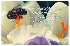 bienen sprüche honig wohnt in jeder blume freude an jedem orte muss nur