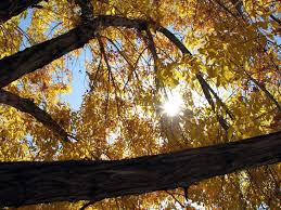 trees autumn nature sun hd wallpapers for mobile phones