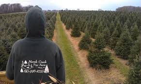 cut your own directions marsh creek tree farm