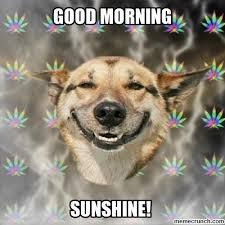 Happy Dog Meme - dog good morning