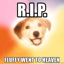 Advice Dog Memes - r i p fluffy went to heaven holy advice dog meme generator