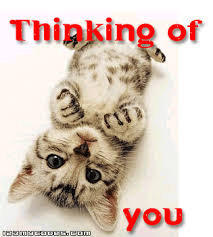Thinking Cat Meme - thinking of you cat graphic for zorpia thinking of you