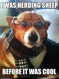 Hipster Dog Meme - hipster corgi corgi crazy pinterest corgi corgis and dog