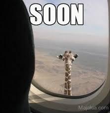 Meme Giraffe - meme
