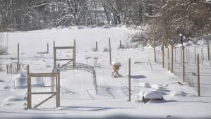 winter optimysticgardener