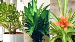 air purifying indoor plants health com health